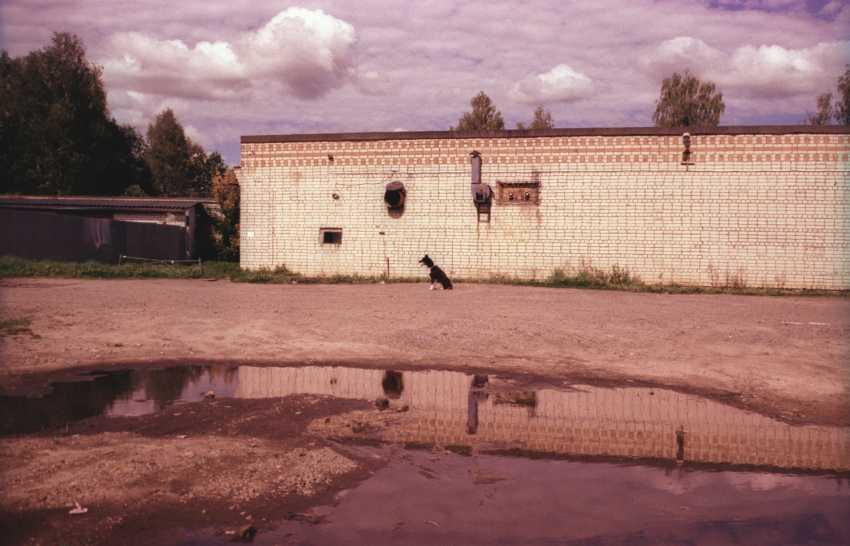 Alexey Semerikov. The dog - photo 1