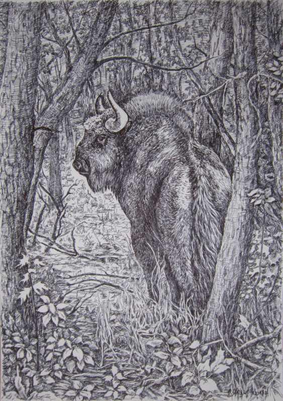 Olga Yakimets. Bison - photo 1