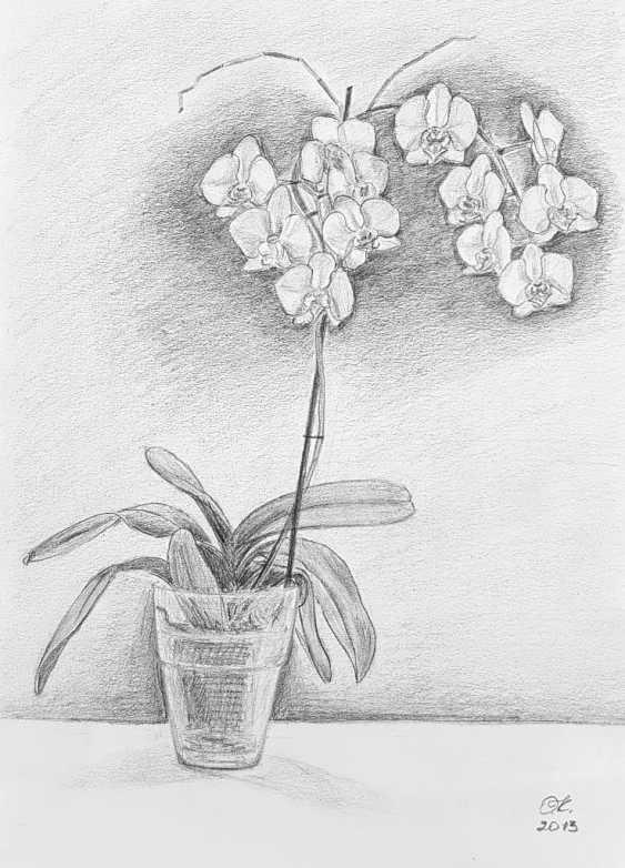 "Olha Krasko. ""Orchid"" - photo 1"