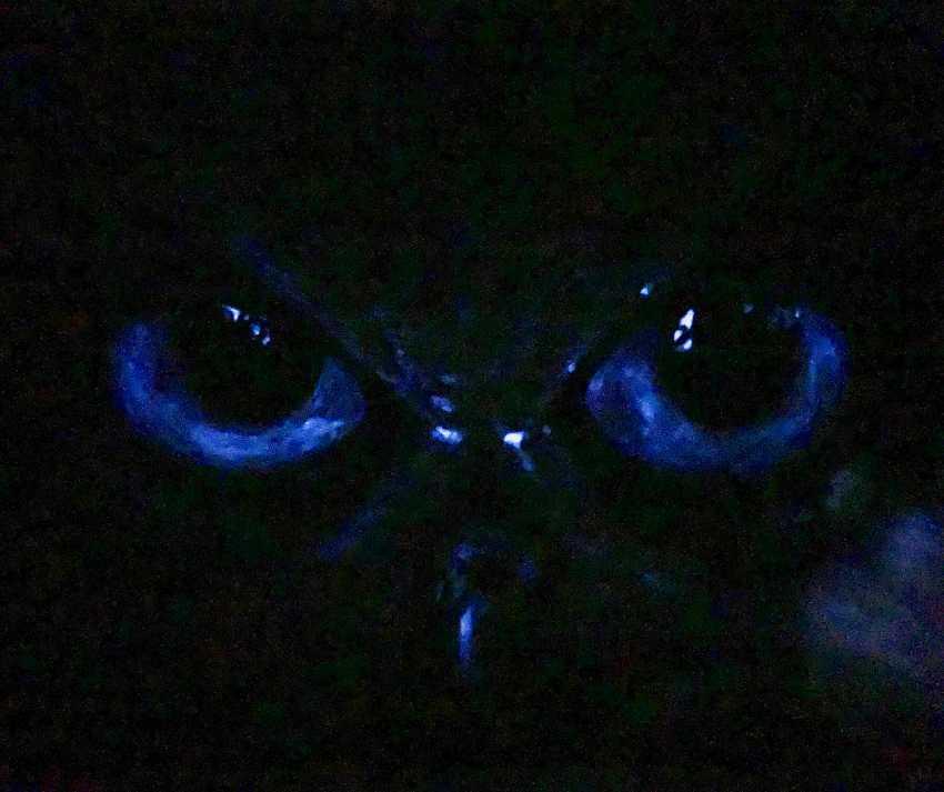 "Oksana Petrenko. ""Look owl"" - photo 3"