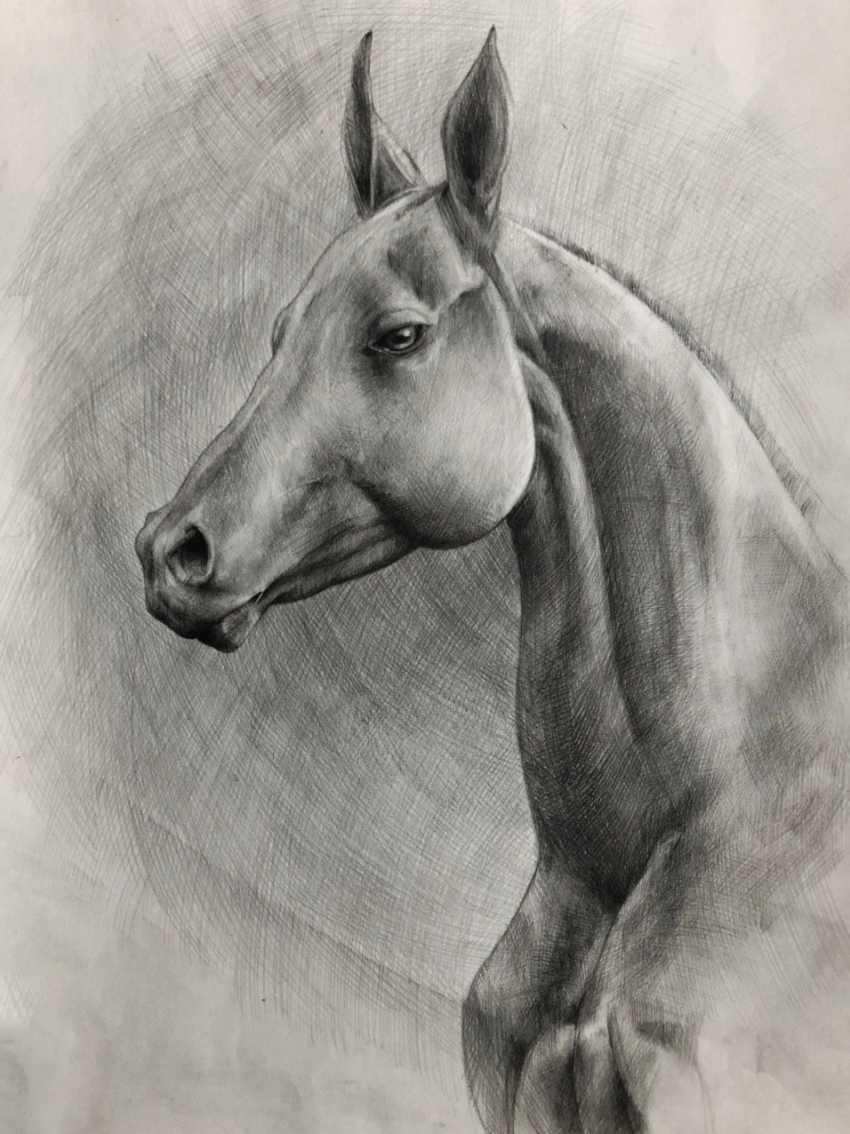 Karina Gorbatova. Horse - photo 2