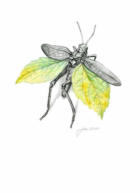 Alexey Fomin. Autumn entomology (6) - photo 1
