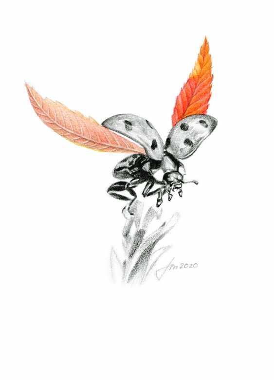 Alexey Fomin. Autumn entomology (7) - photo 1
