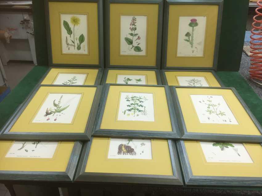 Botanical Prints - photo 1