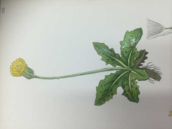 Botanical Prints - photo 2