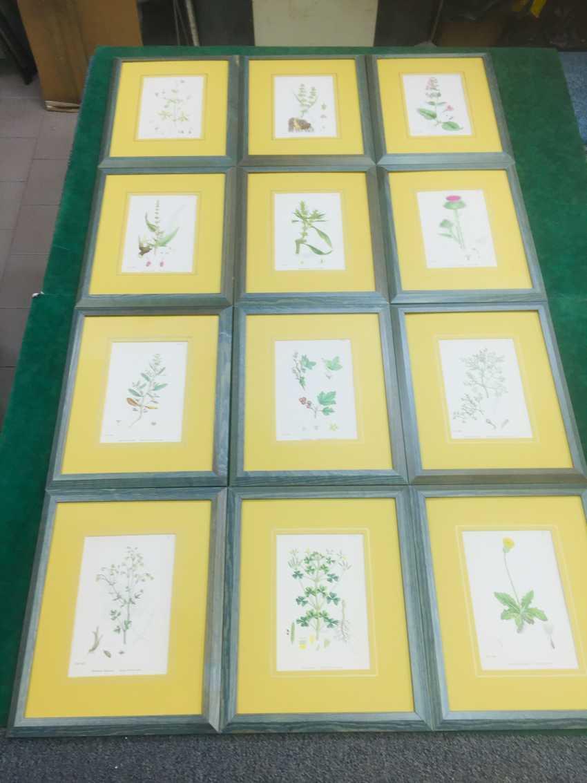 Botanical Prints - photo 3