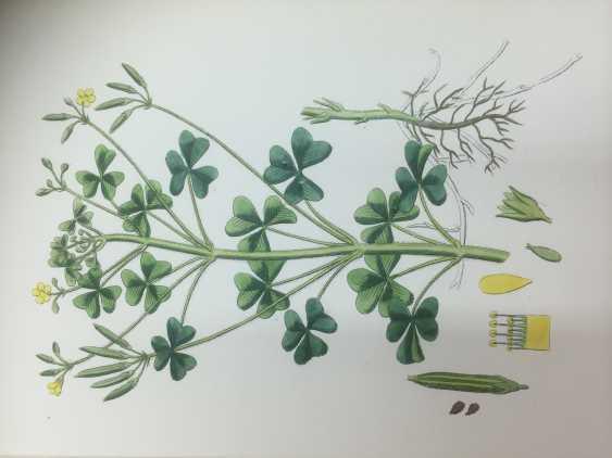 Botanical Prints - photo 4