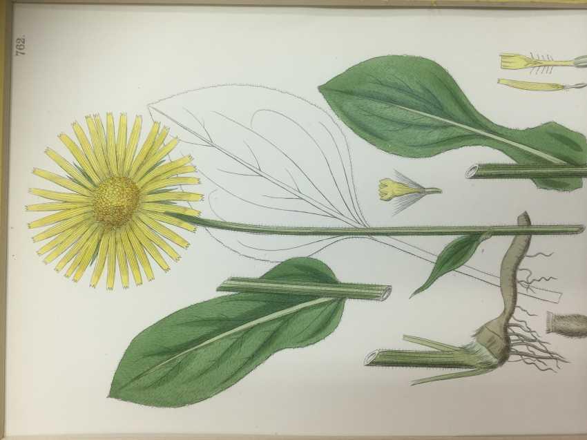 Botanical Prints - photo 5