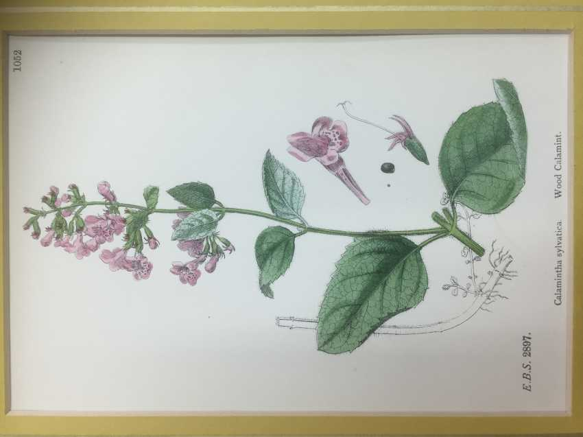 Botanical Prints - photo 6