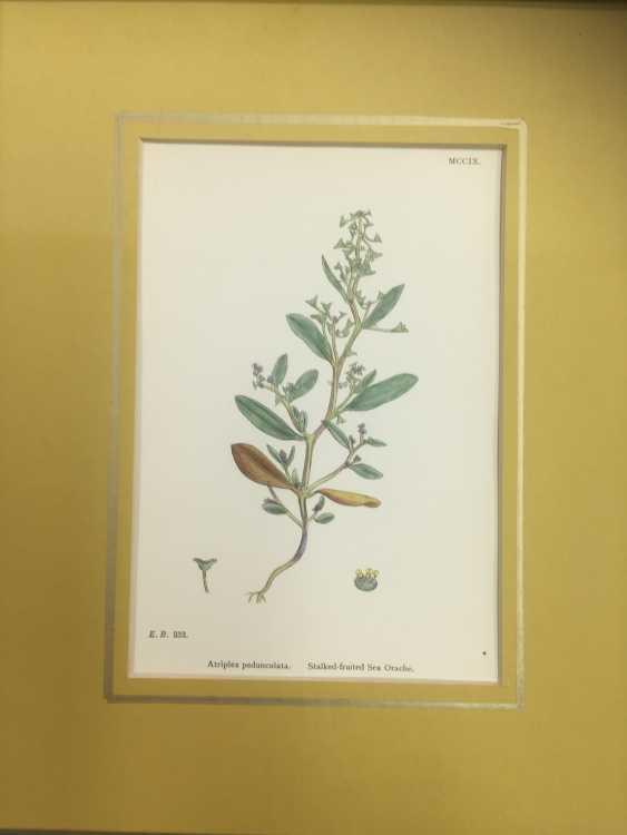 Botanical Prints - photo 7
