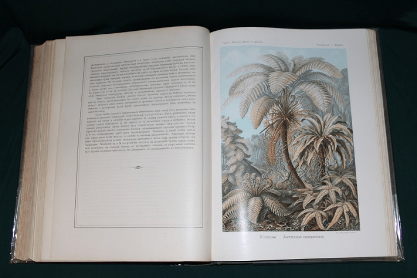 The beauty of forms in nature, Haeckel. 1903 - photo 2