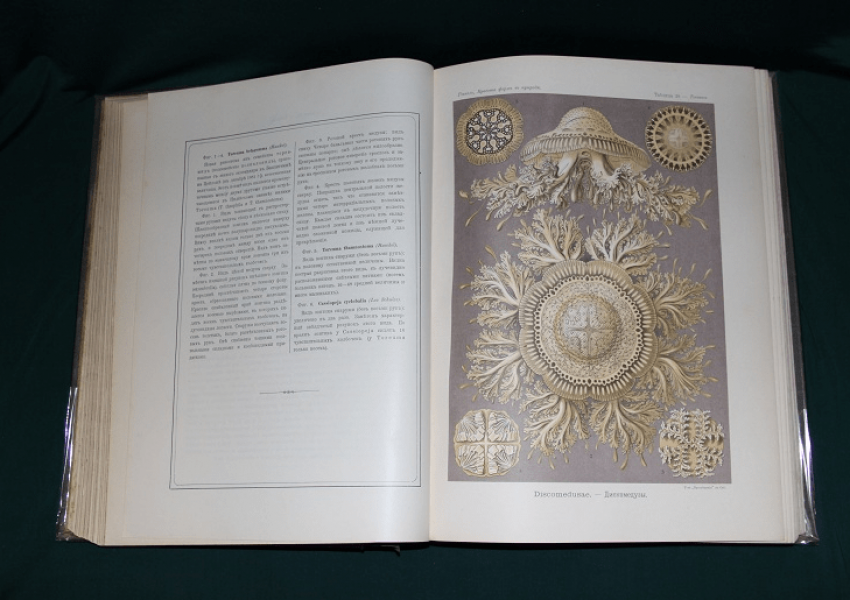 The beauty of forms in nature, Haeckel. 1903 - photo 1