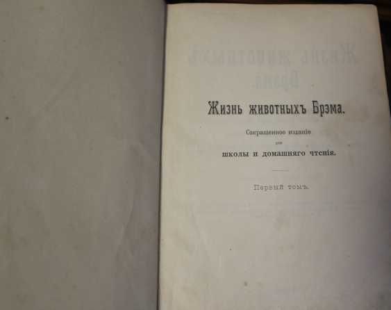 Bram. The life of animals. Russia, before 1917 - photo 5