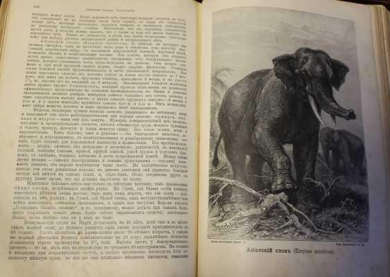 Bram. The life of animals. Russia, before 1917 - photo 9