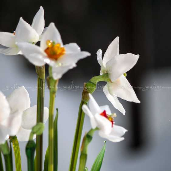 Oksana Parfentyeva. Floral arrangement SPRING IN middle-EARTH - photo 6