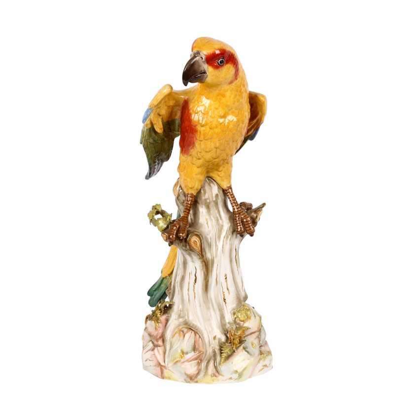 "MEISSEN large animal figurine ""parrot master"", 1860-1924. - photo 1"
