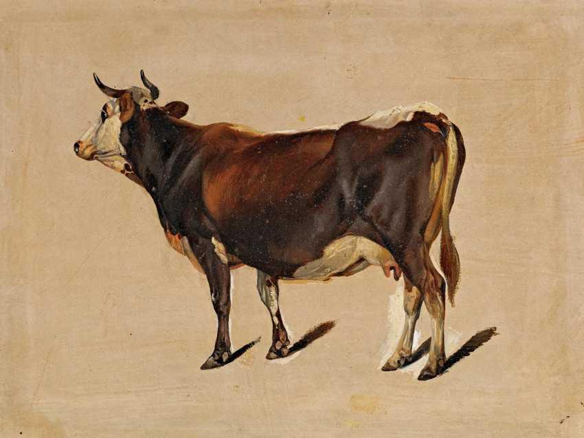 Gauermann, Friedrich. Ölstudie of a cow. - photo 1