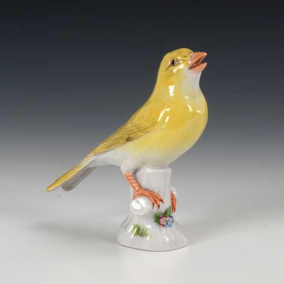 Canary-Bird, Meissen. - photo 1