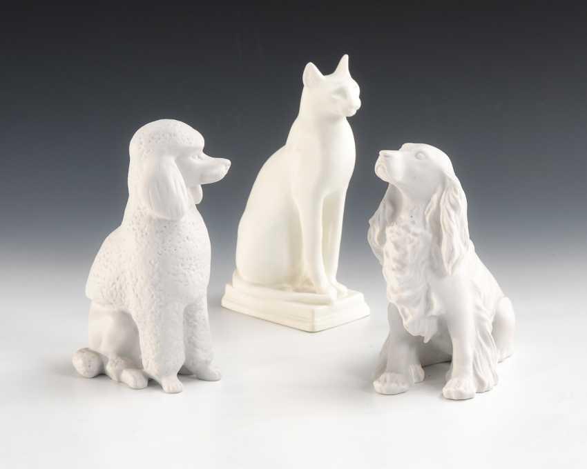 2 dogs and 1 cat, Lomonosov. - photo 1