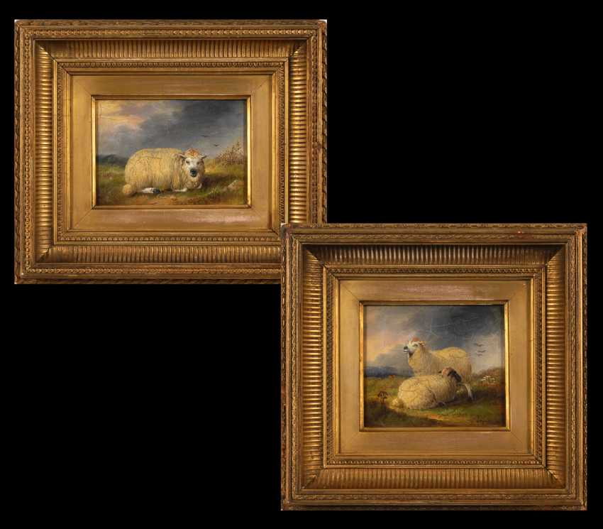 English Animal Painter: Two Sheep Images. - photo 1