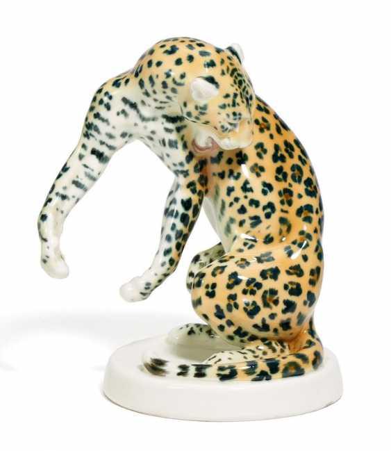Sich leckender Leopard - Foto 1