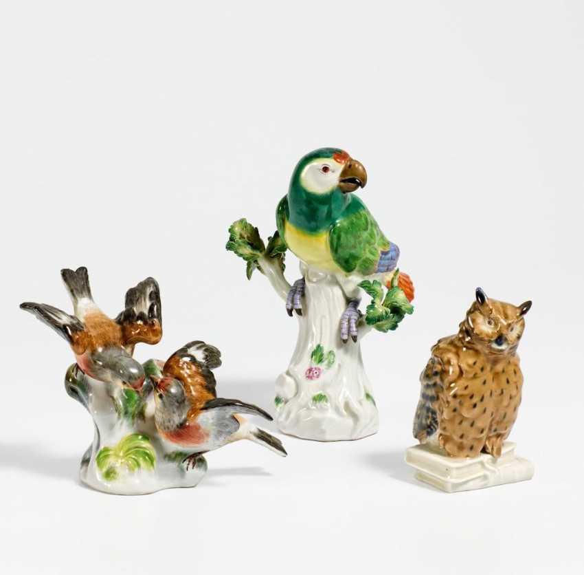 Papagei, Uhu und Hänflingpaar - Foto 1