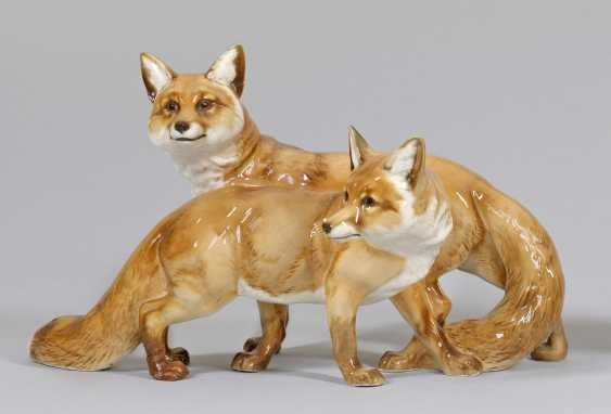 Young foxes - photo 1