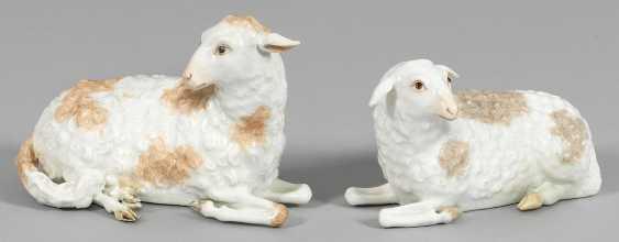 Some dormant sheep - photo 1
