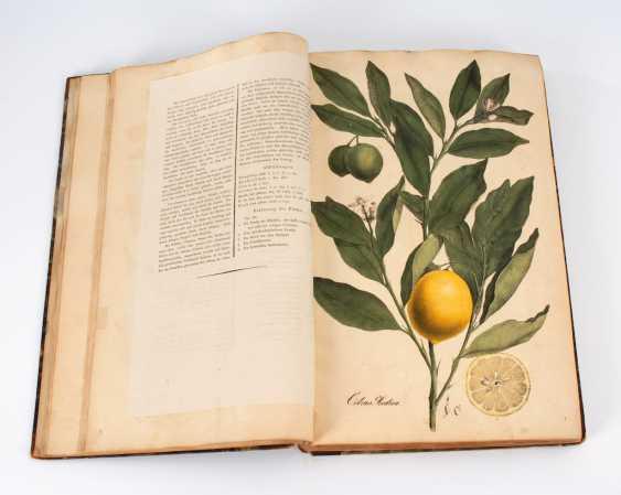"(Nees von Esenbeck, Th.F.L.: ""Plantae m - photo 4"