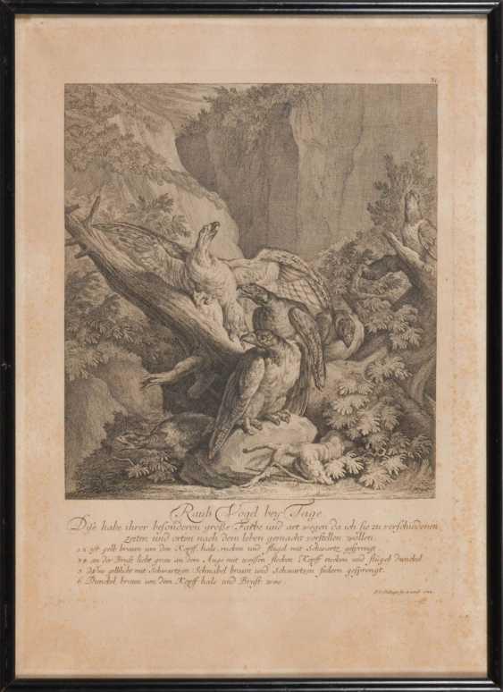 RIDINGER, Johann Elias: 4x wild animals. - photo 1