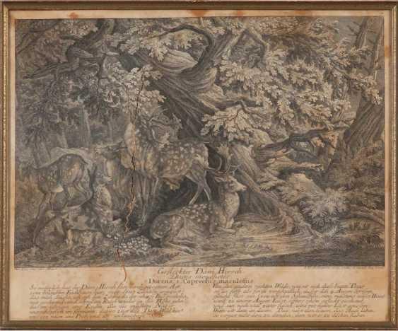 RIDINGER, Johann Elias: 4x wild animals. - photo 2