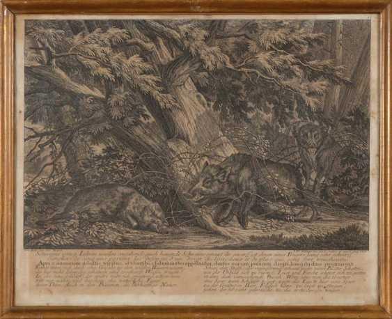 RIDINGER, Johann Elias: 4x wild animals. - photo 3