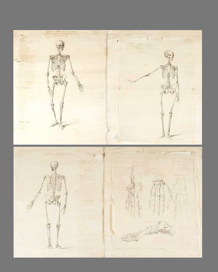 Four Anatomical Drawings of skeletons - photo 1