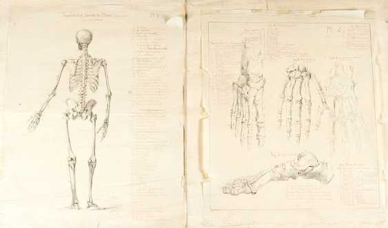 Four Anatomical Drawings of skeletons - photo 2