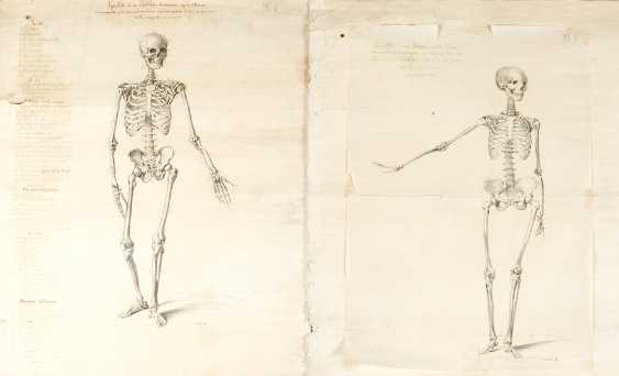 Four Anatomical Drawings of skeletons - photo 3