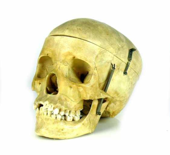 Anatomical Skull - photo 1