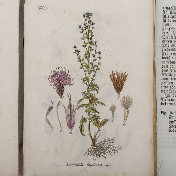 STURM, JACOB, Deutschlands Flora, 29 loose-leaf collections in slipcase, Nuremberg, 1798-1811, - photo 2