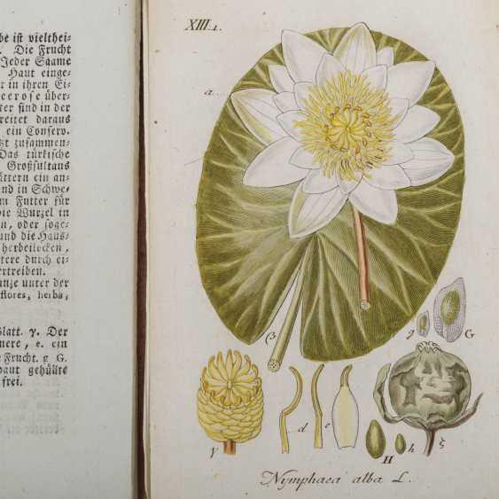 STURM, JACOB, Deutschlands Flora, 29 loose-leaf collections in slipcase, Nuremberg, 1798-1811, - photo 3