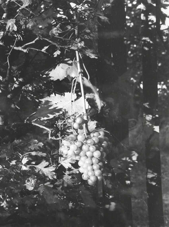 Batz, Eugen - photo 4