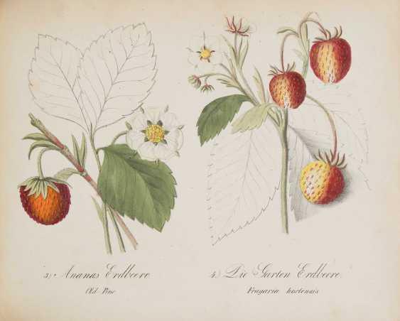 German Fruit Cabinet - photo 3