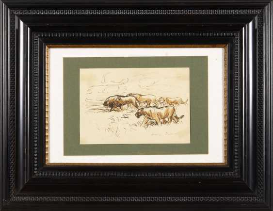 Dill, Otto: lions in the Savannah. - photo 2