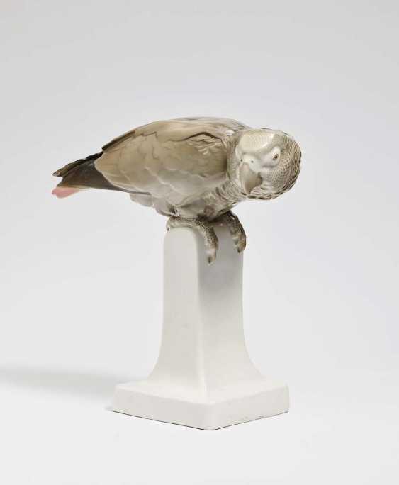 Grey parrot. Nymphenburg, 1911, Willy Reins - photo 1