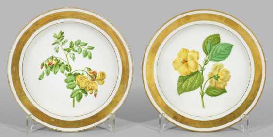 Пара уголовное украшает с ботанический воображения - фото 1