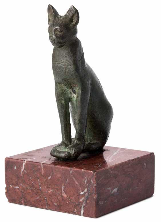 Cat - photo 1