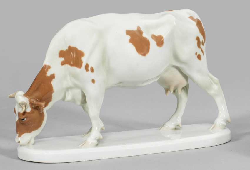Выпас Коровы - фото 1