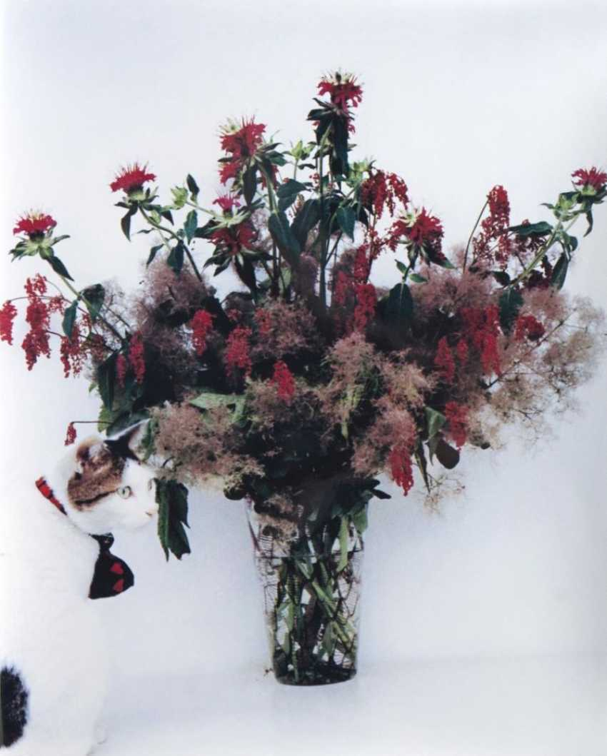 Чиро с цветами - фото 1
