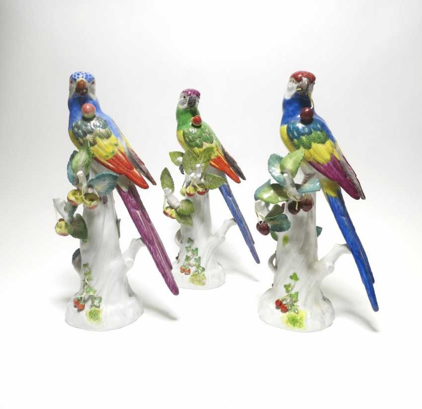 Three flat-tail-parakeets with cherries - photo 1