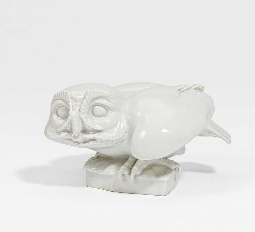 Little Owl - photo 1