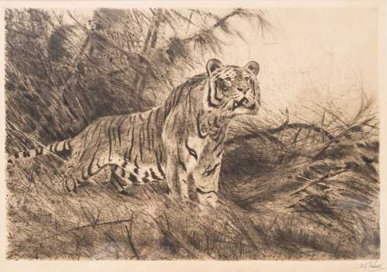 "KUHNERT, WILHELM (1865-1926), ""Tiger in the undergrowth"", - photo 1"