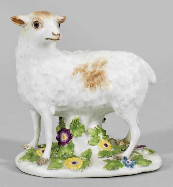 Standing Sheep - photo 1